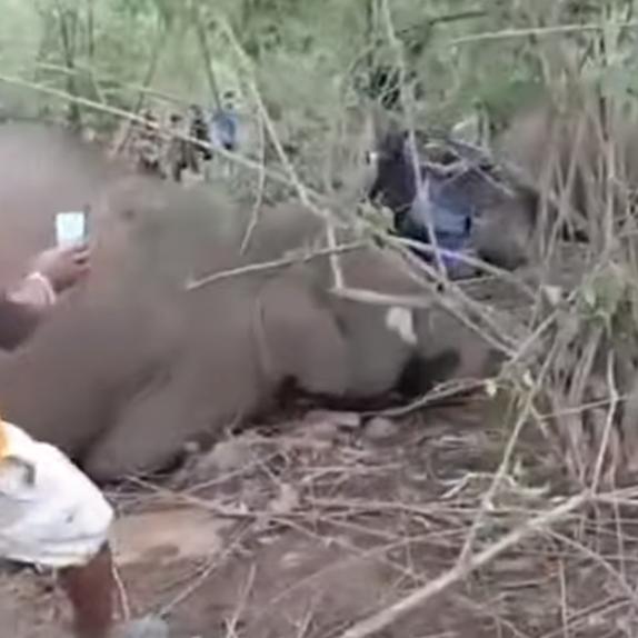 فيديو.. صاعقة برق تقتل 18 فيلاً برياً في الهند
