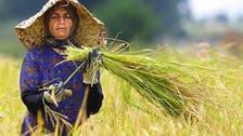 ایران بیشترین شکاف میان حضور زنان و مردان در بازار کار را دارد