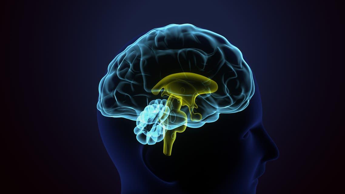دماغ الإنسان (شترستوك)