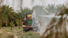 سعودی عرب: صحرائی ٹڈی تلف کرنے کے لیے 4 ہزار ہیکٹر زرعی اراضی پر اسپرے