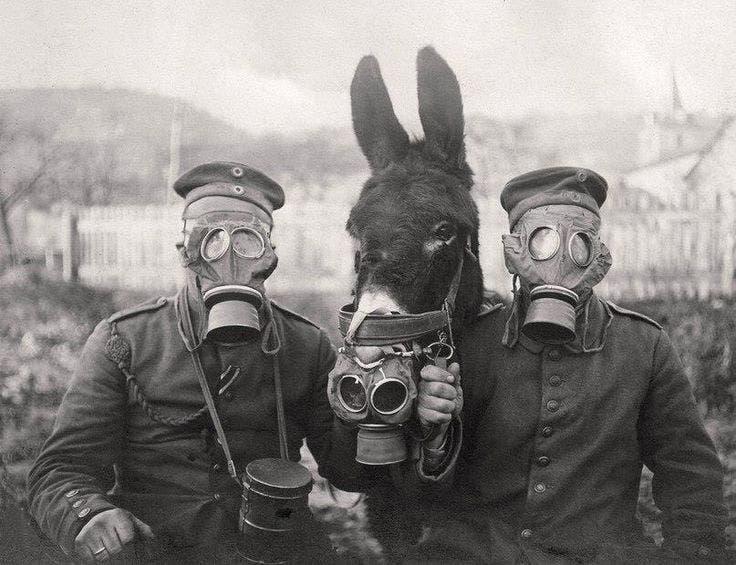 جنديان ألمانيان رفقة حمارهما وجميعهم مجهزون بأقنعة ضد الغاز السام بالحرب الكبرى -