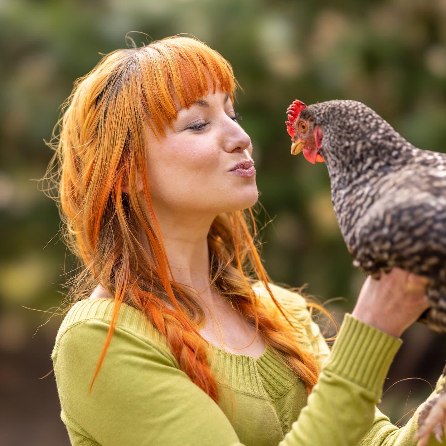 """""""لا تقبلوا الدجاج"""".. توصية أميركية رسمية للحد من السالمونيلا"""