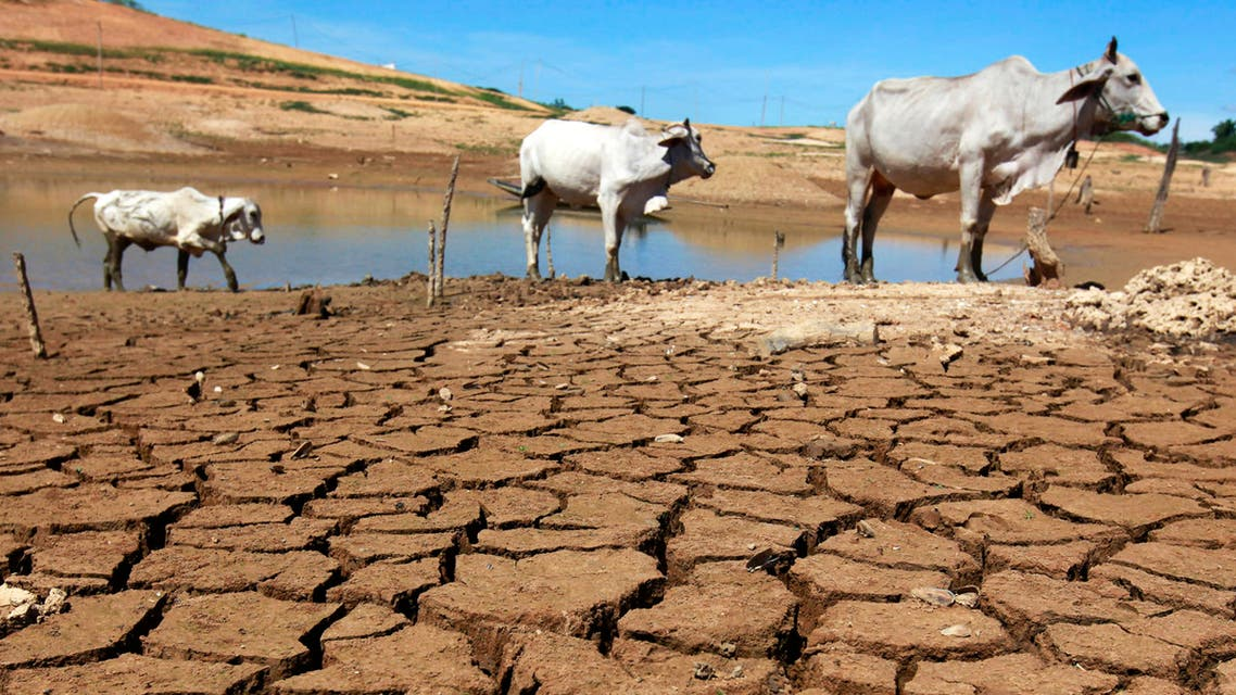 Cows are seen at the dried-up Sirikit dam in Thailand's Uttaradit province, 470 km (292 miles) north of the capital Bangkok June 17, 2010. (Reuters)