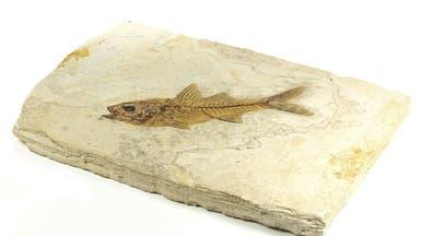 اكتشاف مذهل في مصر.. أسماك عاشت في مياه ساخنة!