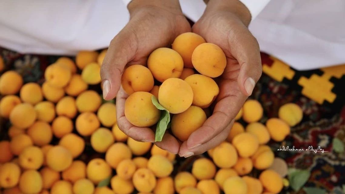 فاكهة المشمش الطائفي