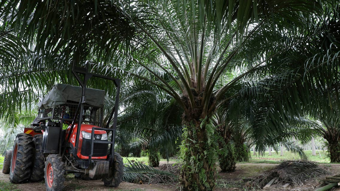 A mini tractor grabber collects palm oil fruits at a plantation in Pulau Carey, Malaysia, January 31, 2020. (File Photo: Reuters)