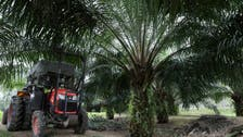 WTO sets up expert panel to resolve Malaysia-EU palm oil row