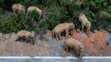 وڈیو: چین میں جنگلی ہاتھیوں کی ڈار کا شہرکی سڑکوں پر مٹرگشت