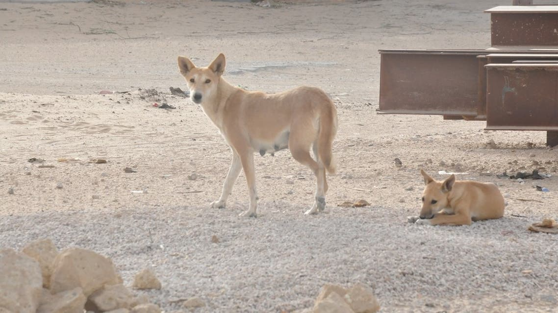 خطر الكلاب الضالة