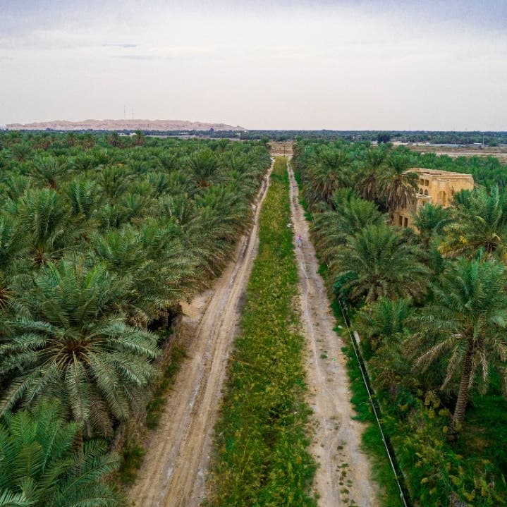 السعودية الأولى عالمياً في مؤشرات الأداء البيئي من بين 180 دولة
