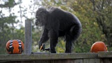 Oldest male chimpanzee in US dies at San Francisco zoo