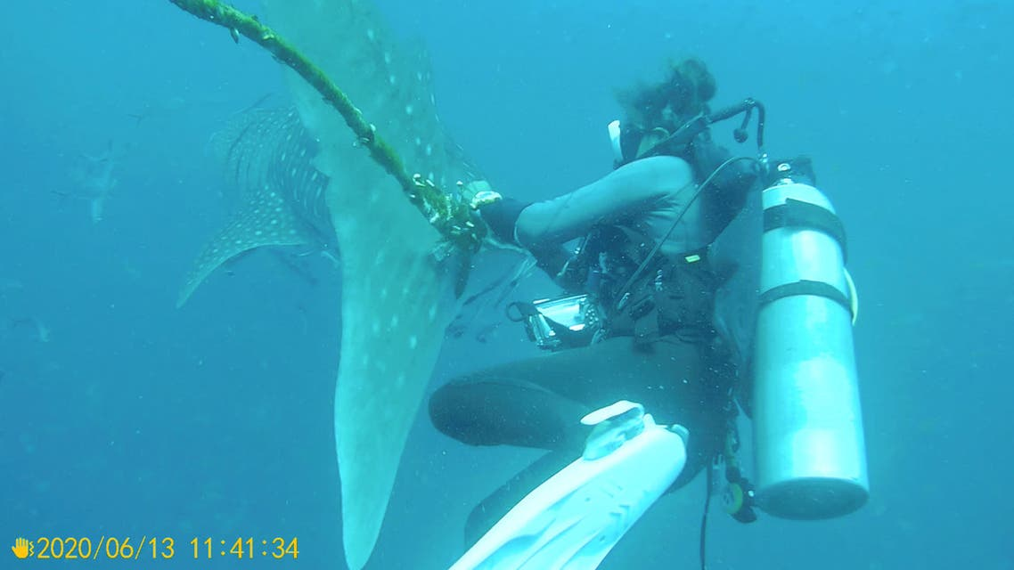 A diver tries to cut a rope from the tail of a whale shark near Koh Tao Island, Thailand June 13, 2020, in this still image obtained from a social media video. (Reuters)