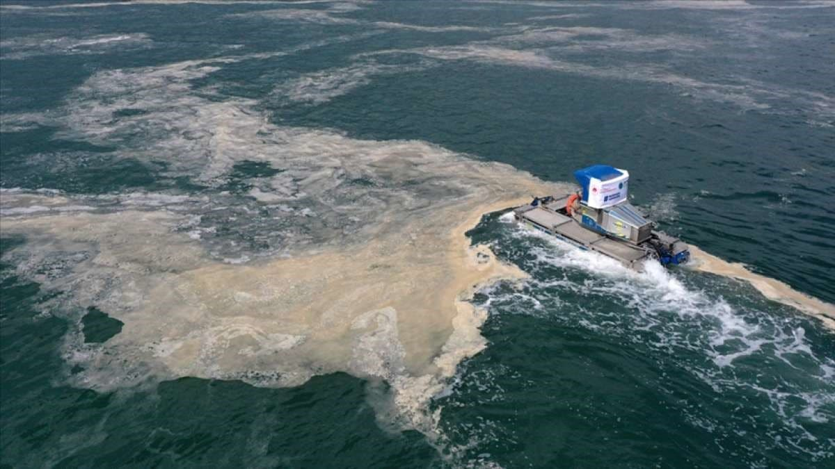 Sea rubber, the pest, the die main seas of Turkey polluted, expanding