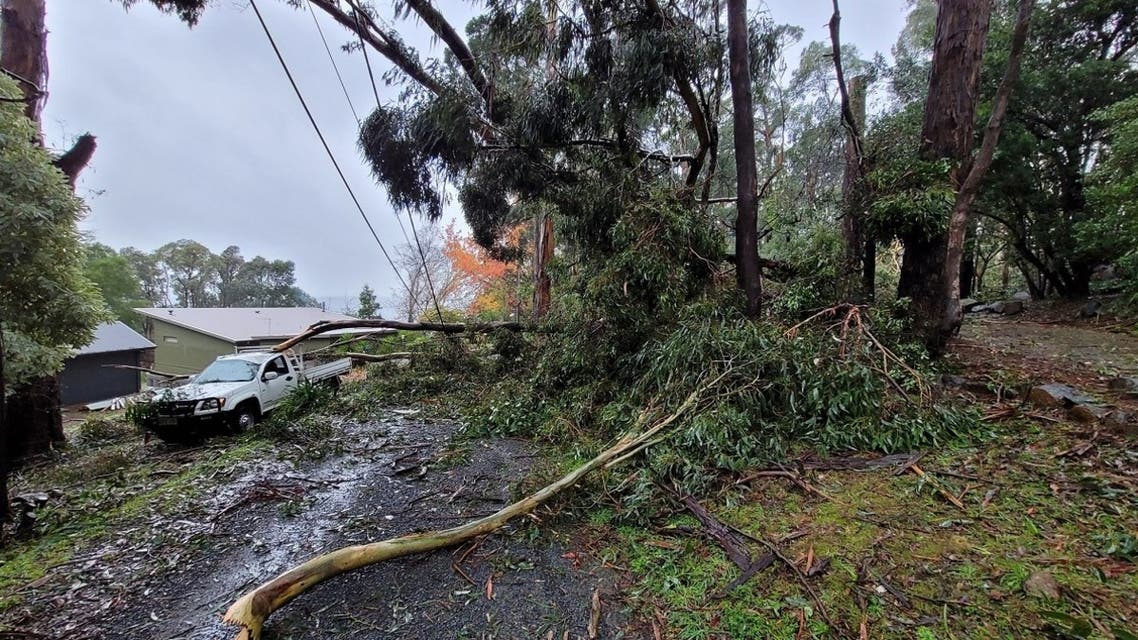 Wild weather in southeast Australia toppled trees, trapping people in cars and houses and cutting power to more than 200,000 homes as many braced for flooding. (Twitter)