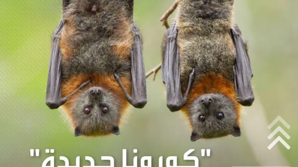 سريعة الانتشار.. اكتشاف أنواع جديدة من فيروس كورونا في الخفافيش