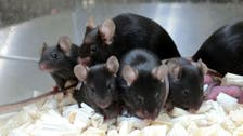 'Space pups': Mouse sperm stored on space station produces healthy young