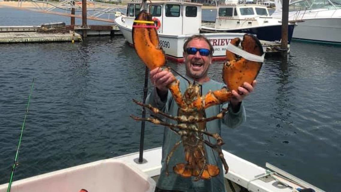 Lobster diver Michael Packard says he was scooped into the mouth of a humpback whale and survived. (Facebook)