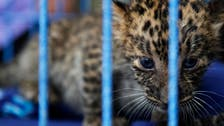 Dubai authorities say cracking down on owners of illegal wildlife