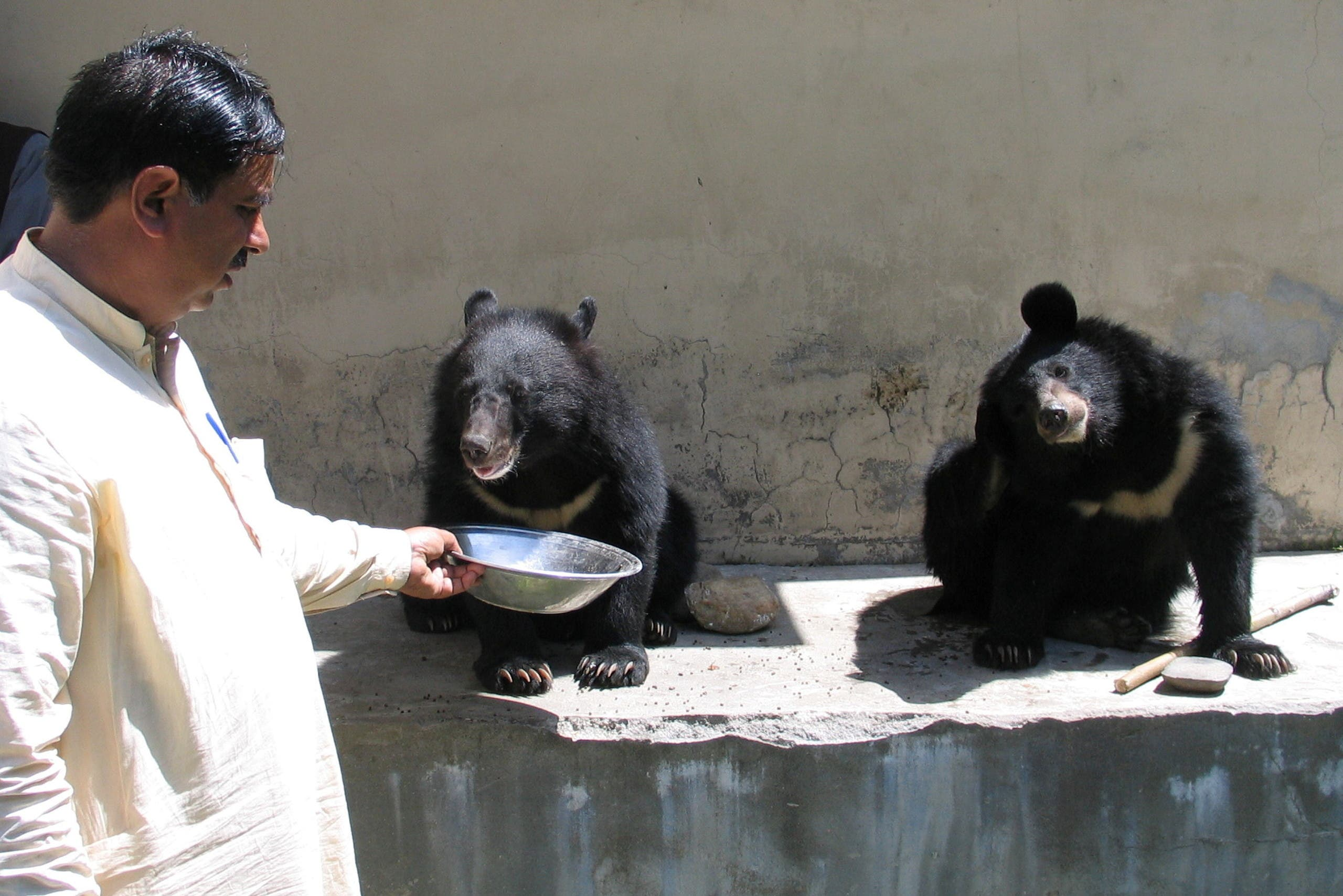 Mohammad Ashraf, assistant game warden, feeds a pair of Asian black bears, rescued a year ago near the Line of Control (LoC), at the Wildlife and Fisheries department in a Dawarian village in Neelum Valley, Pakistan-administrated Kashmir, June 12, 2021. Picture taken June 12, 2021. (Reuters)