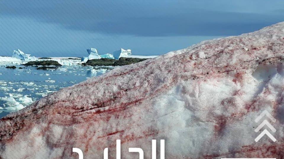 الجليد يتحول للون الأحمر فوق جبال الألب