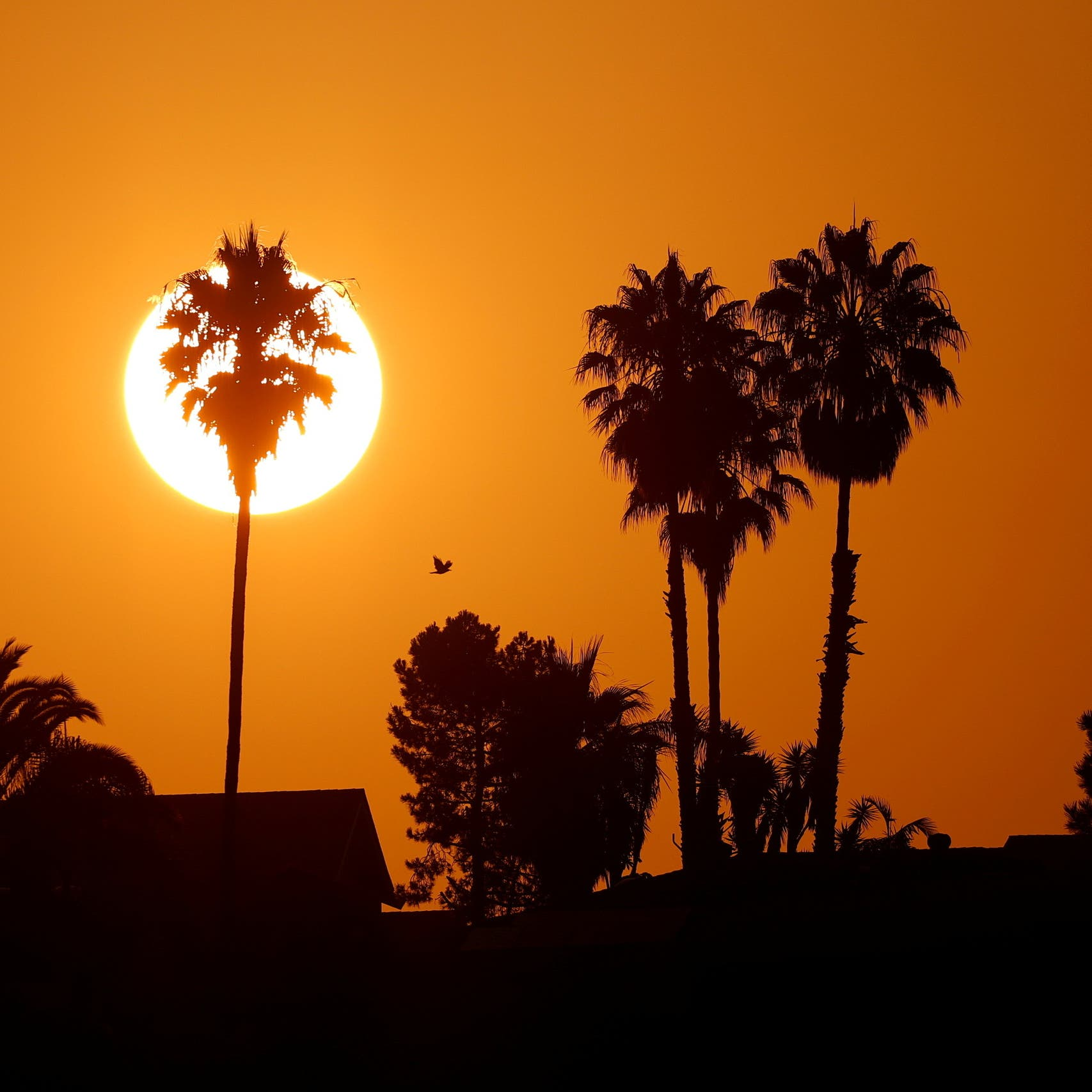 'Apocalyptic' heat wave sweeps through US Southwest, straining power systems