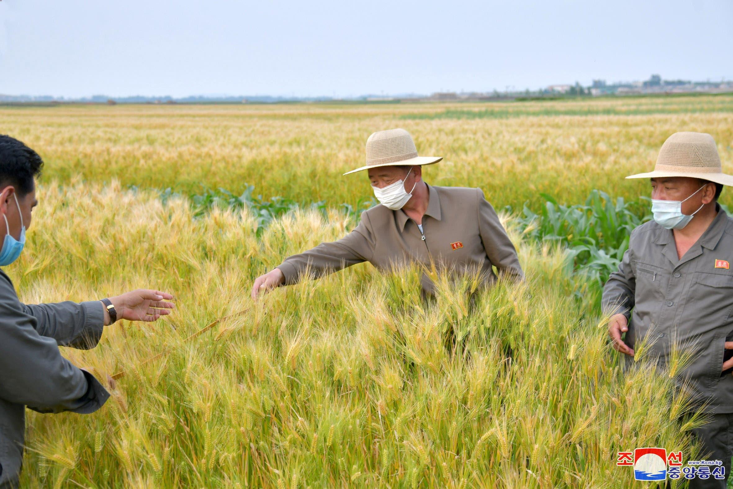 مسؤول كوري شمالي يزور أحد الحقول الزراعية (رويترز)