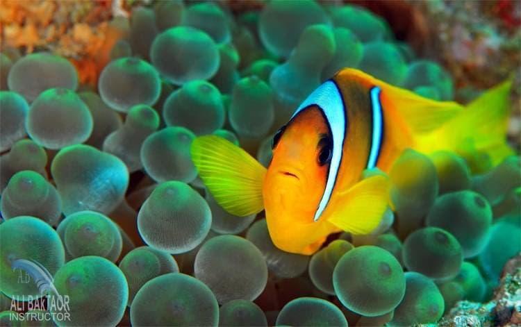تصوير علي بختاور داخل أعماق البحر 10
