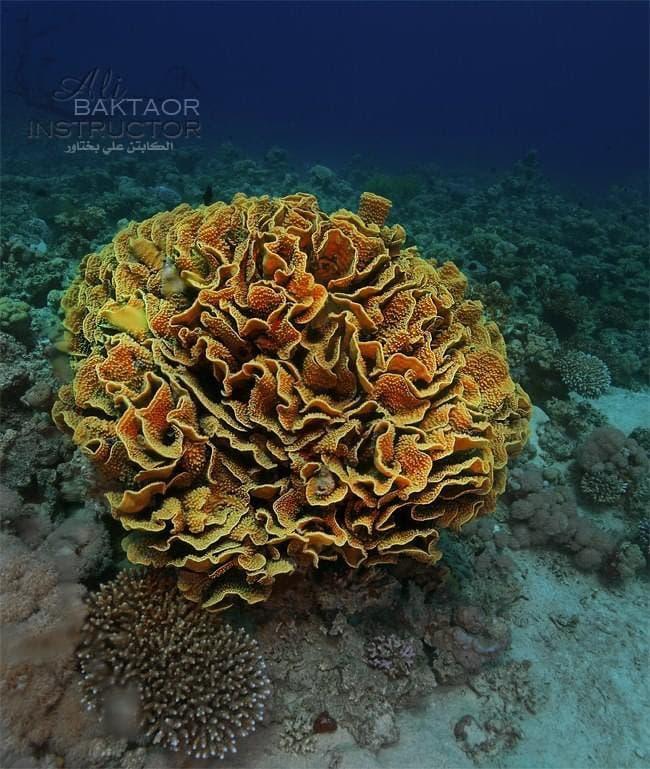 تصوير علي بختاور داخل أعماق البحر