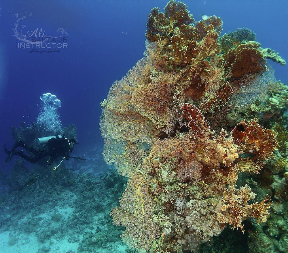 تصوير علي بختاور داخل أعماق البحر 3