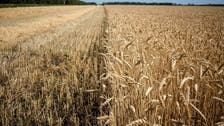 Russia to supply first wheat cargo to Algeria in years