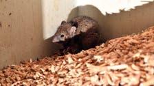 Mouse plague forces Australian prison evacuation