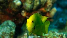 'نیوم' اور 'کاؤسٹ' کا دنیا کا سب سے بڑا مرجانی پارک قائم کرنے کا مشترکہ منصوبہ