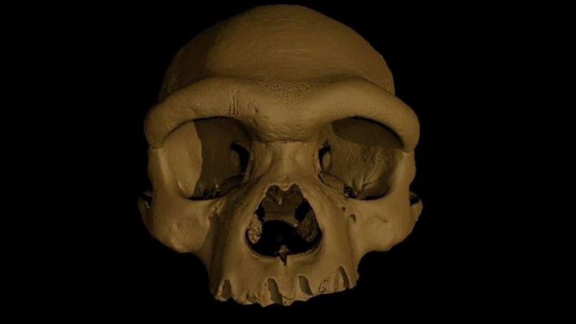 جمجمة رجل التنين (نيويورك تايمز)