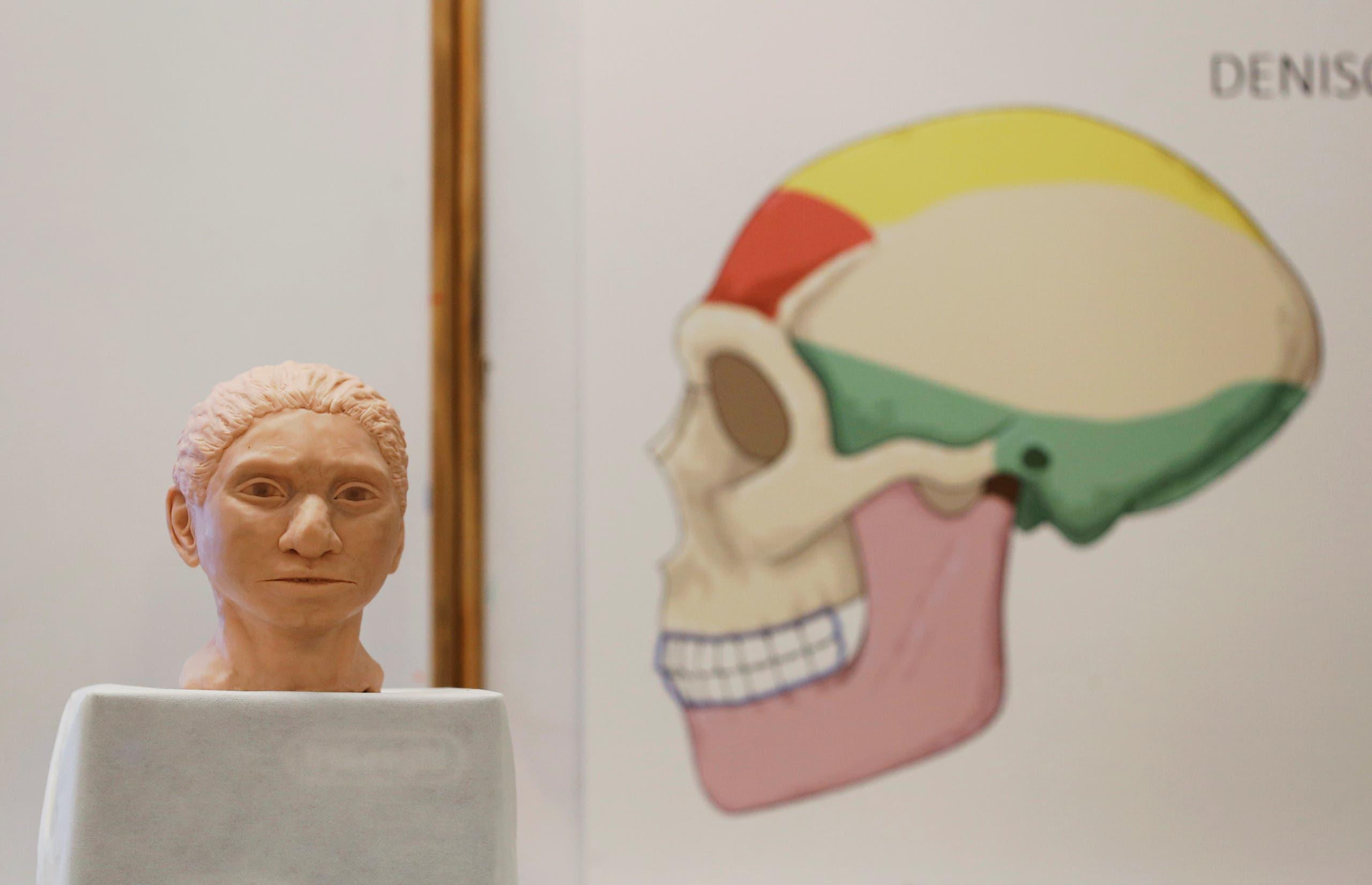 مجسم إنسان الدينيسوفان  (رويترز)