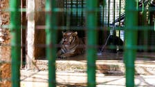 Animals starve in Lebanon's zoos as economy crumbles