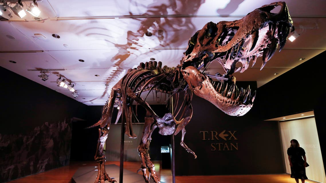 An approximately 67 million-year-old Tyrannosaurus Rex skeleton, one of the largest, most complete ever discovered and named STAN after paleontologist Stan Sacrison who first found it, is seen on display ahead of its public auction at Christie's in New York City, New York, US, September 15, 2020. (Reuters)