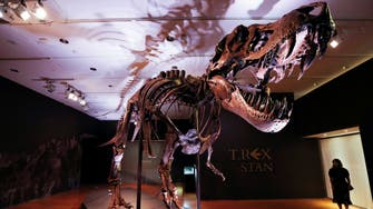 Dinosaurs declined before meteor strike: Study