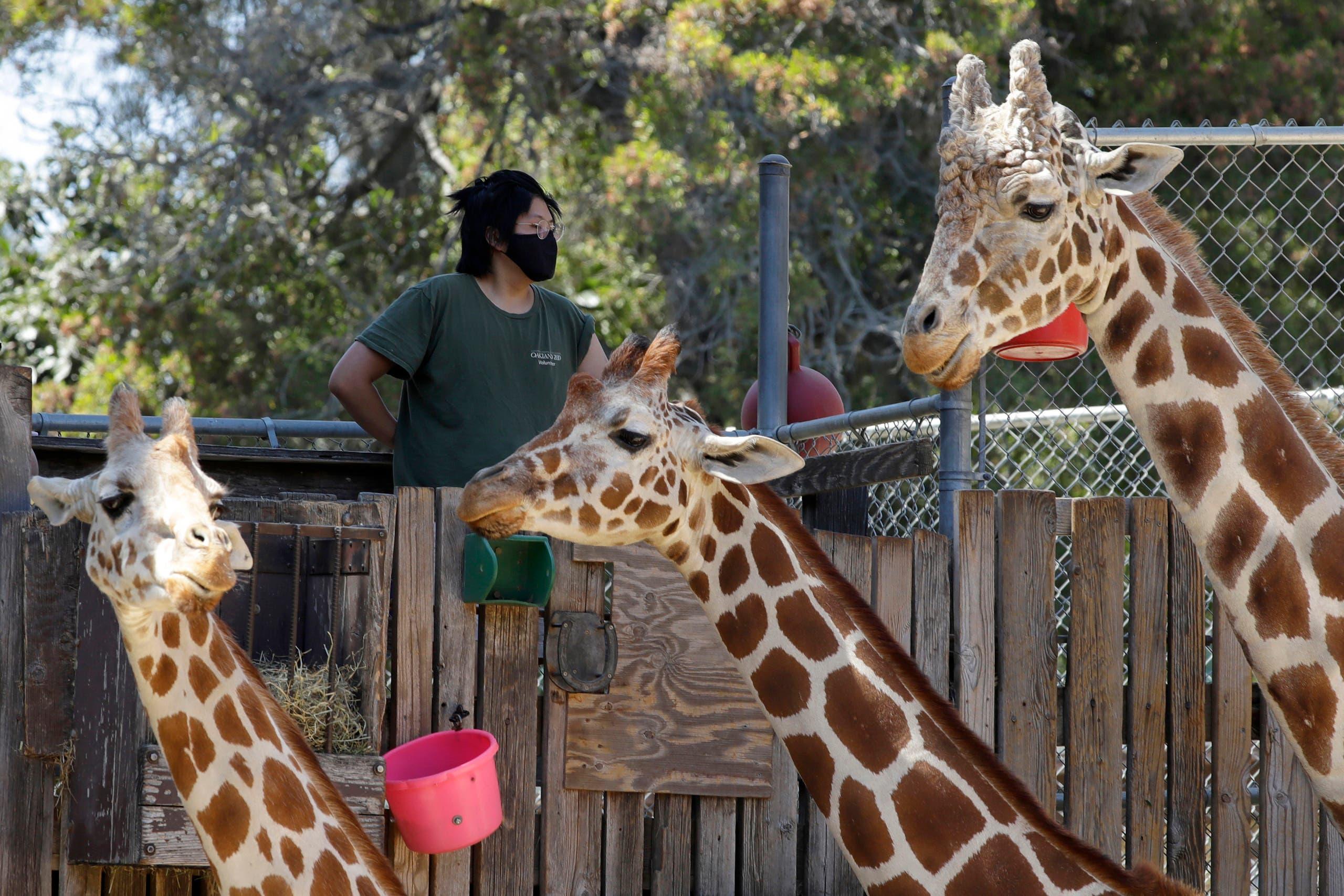 من حديقة حيوان أوكلاند في سان فرانسيسكو