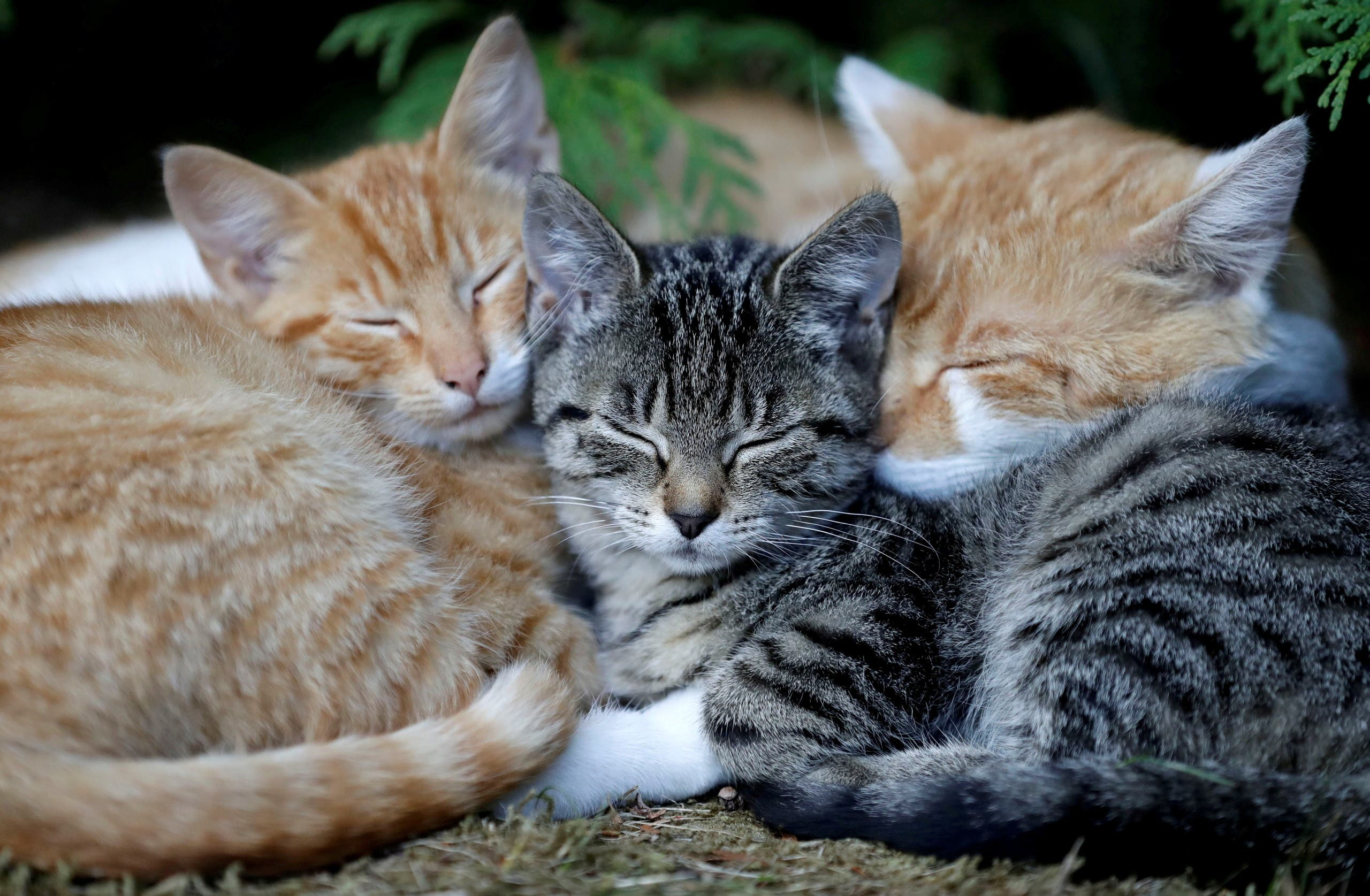 Cats sleep in the village of Krompach near the town of Cvikov, Czech Republic, August 26, 2018. (File Photo: Reuters)