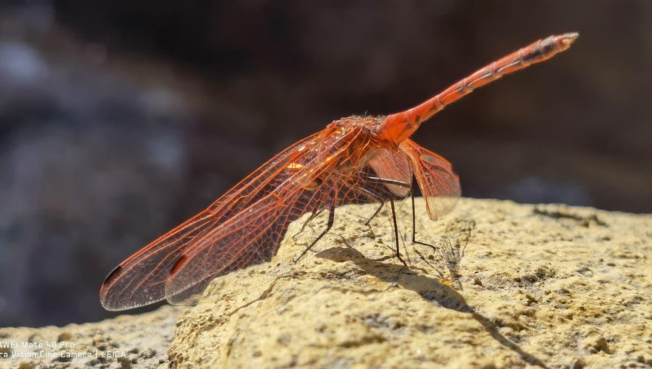 من أنواع الحشرات النادرة