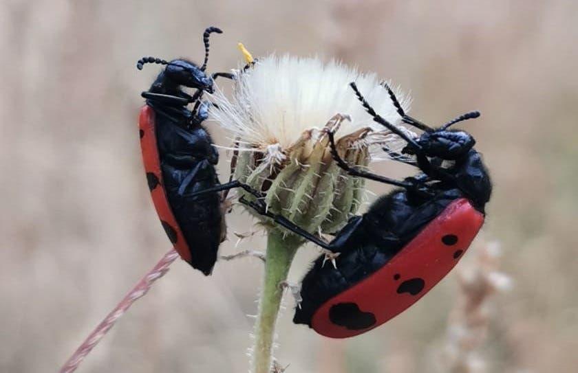 تصوير الحشرات بدقه عالية