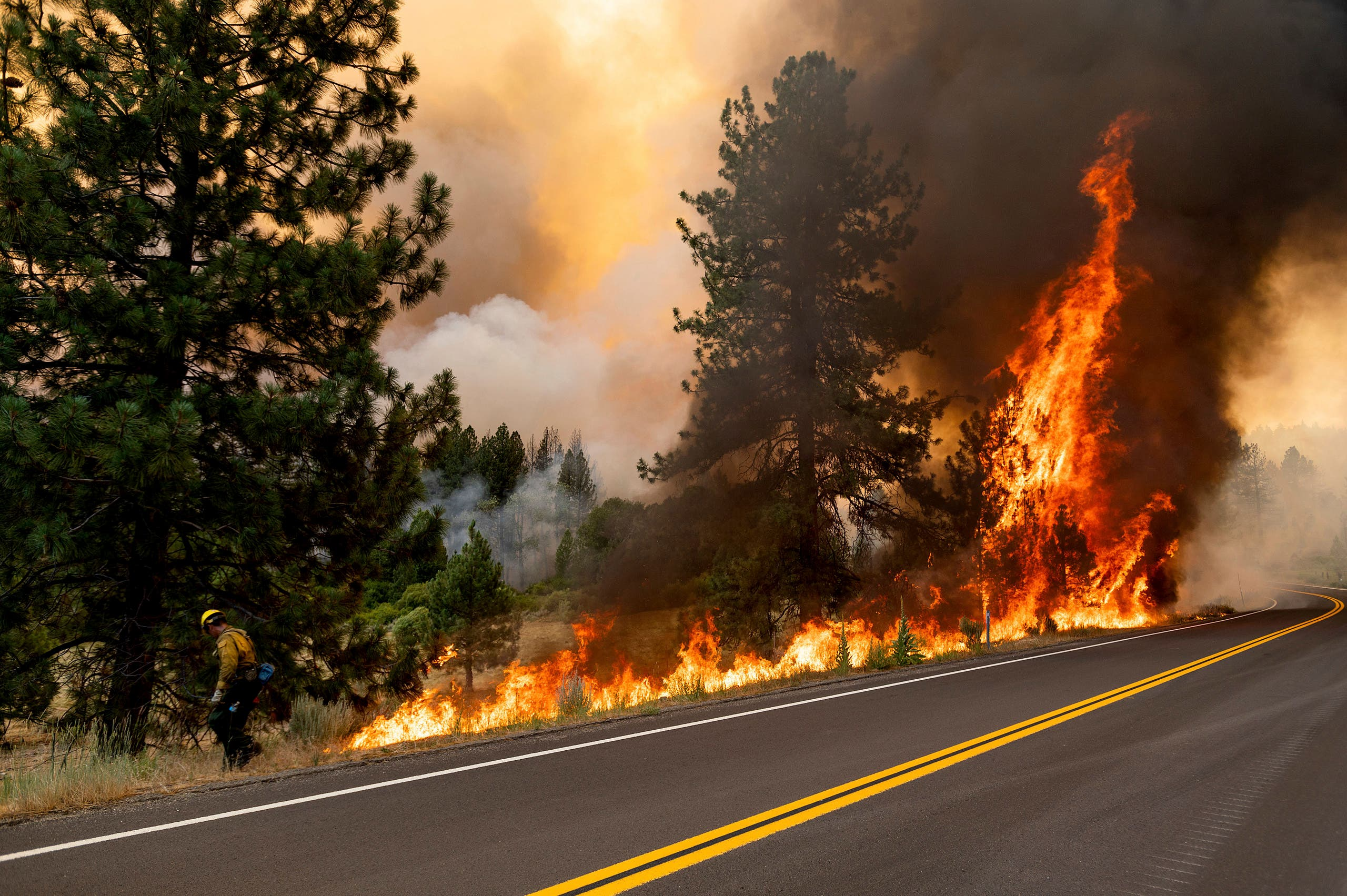 A firefighter burns vegetation while trying to stop the Sugar Fire, part of the Beckwourth Complex Fire, from spreading in Plumas National Forest, California, on Friday, July 9, 2021. (AP)