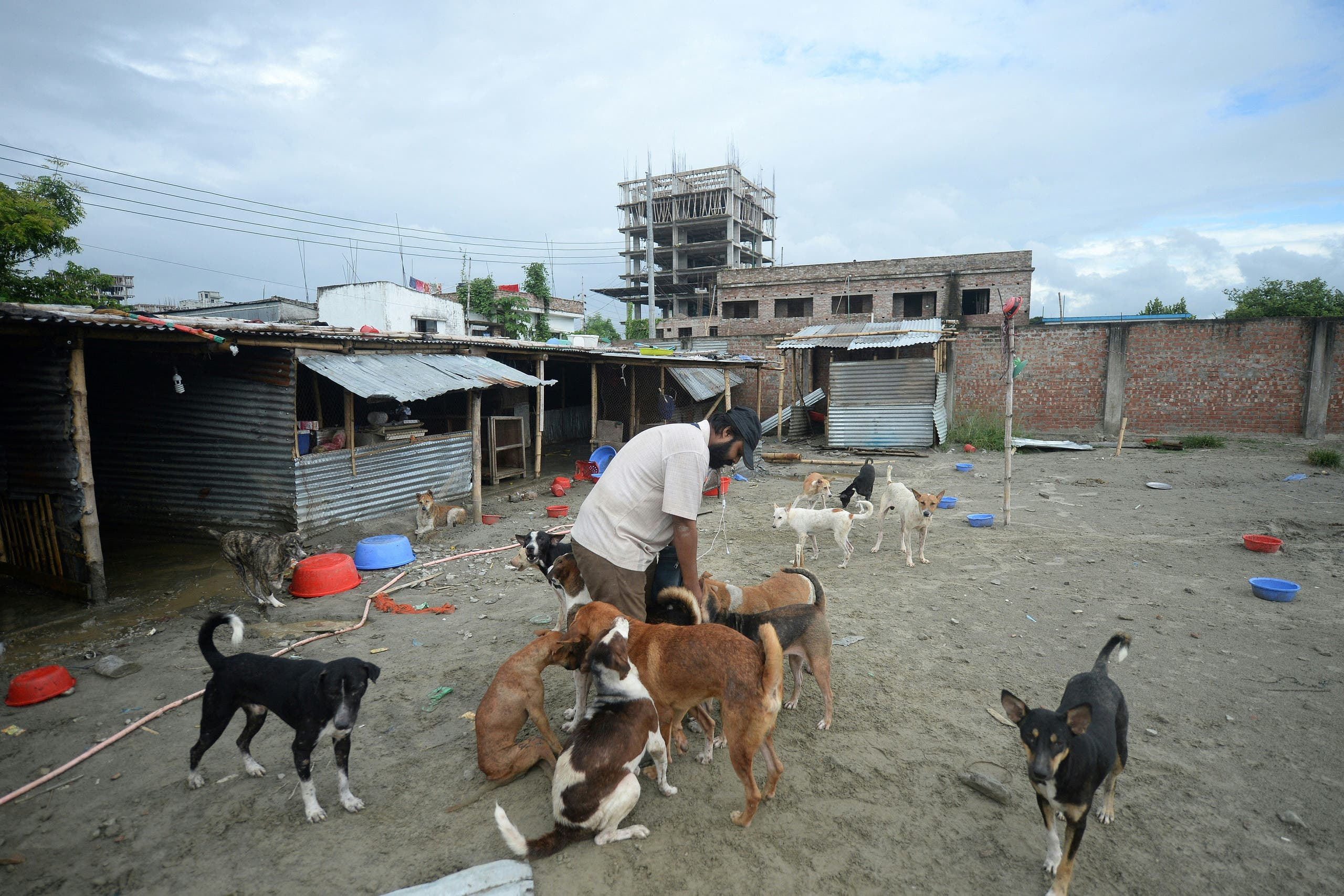 this picture taken on August 16, 2020, Naim Ibne Islam Adi, the head of Bangladesh's largest shelter for stray dogs and cats, feeds dogs at his shelter home in Dhaka. (File photo: AFP)