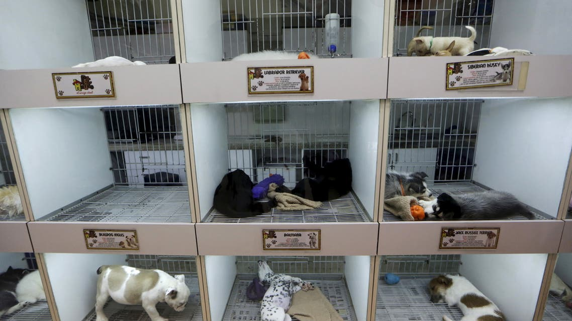 This file photo shows puppies of different breeds rest inside cages at a pet shop. (File photo: Reuters)