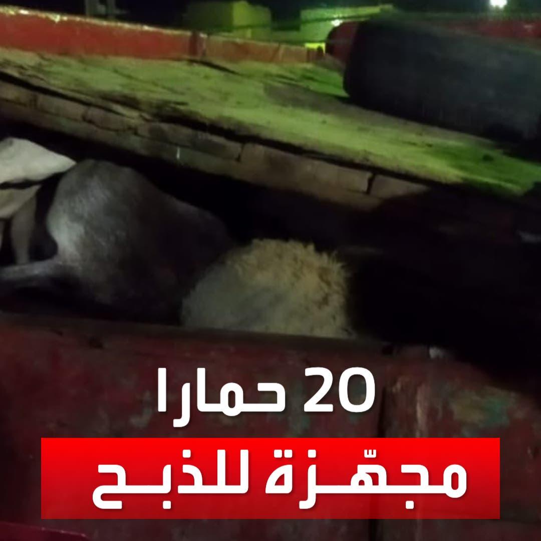 """""""التموين المصرية"""" تحبط محاولة بيع لحوم حمير نافقة"""