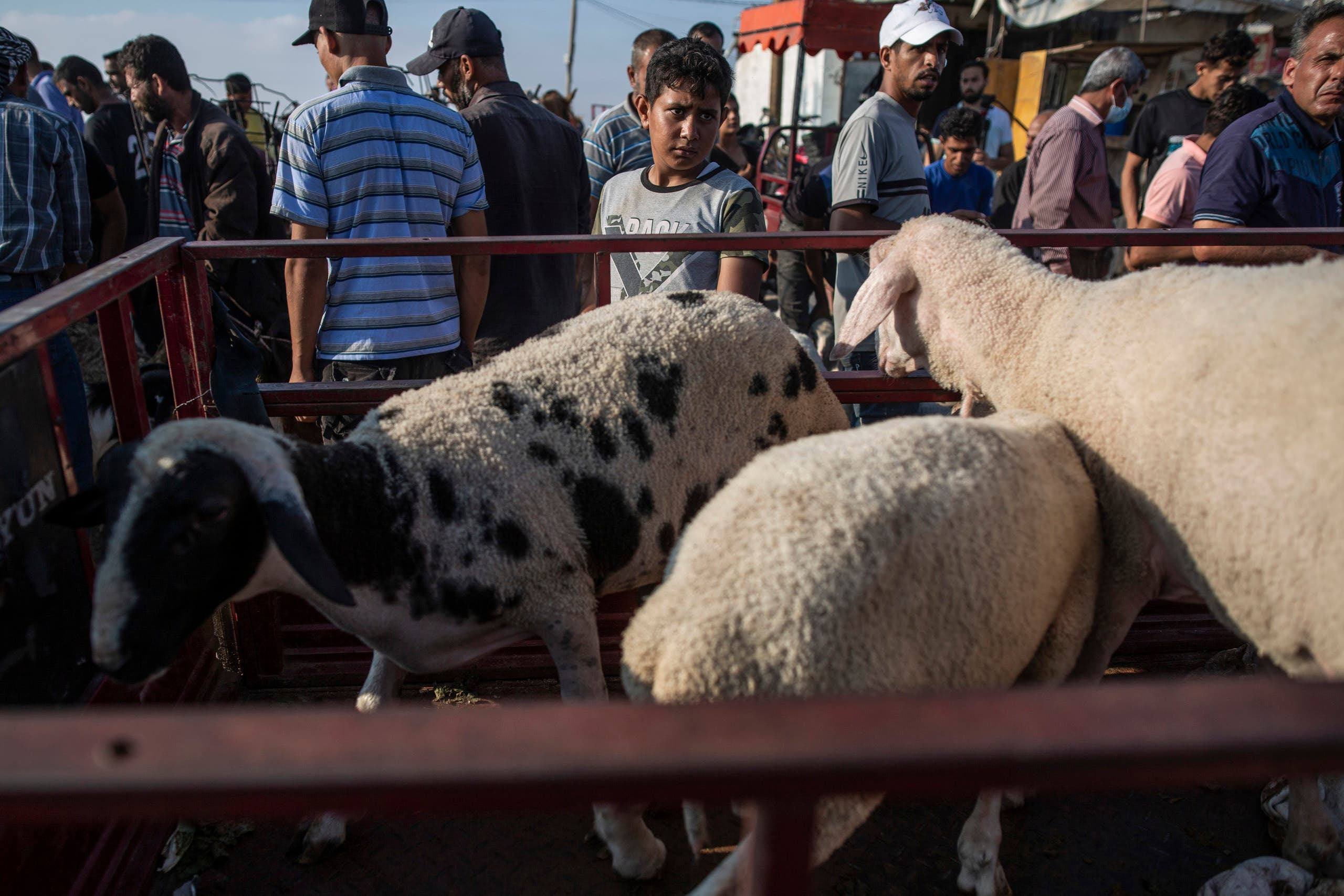 Vendors wait for customers as people look to buy sheep at a livestock market in preparation for the upcoming Muslim Eid al-Adha holiday in Gaza City, Friday, July 9, 2021. (AP)