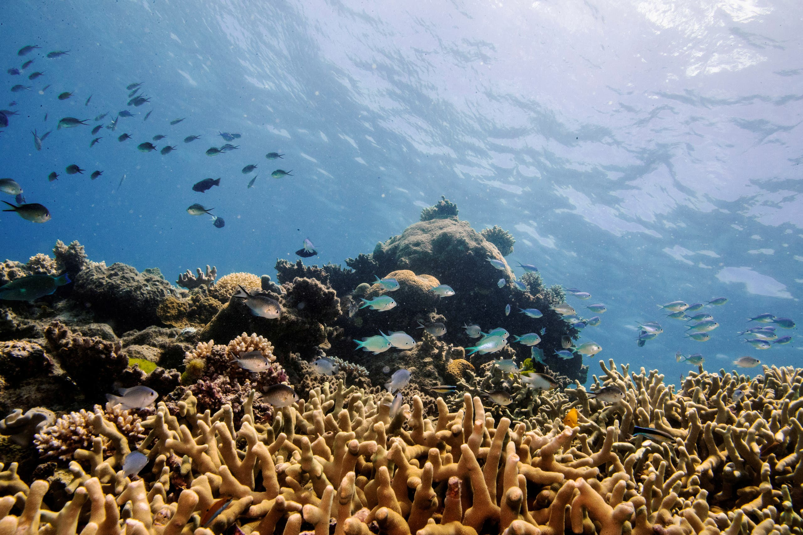 The World Heritage Committee is set to consider whether to add the Great Barrier Reef to UNESCO's list of endangered sites, after high-level lobbying from Australia to prevent the move. (File Photo: Reuters)