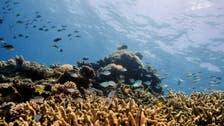 China says UNESCO move on Great Barrier Reef not politically motivated