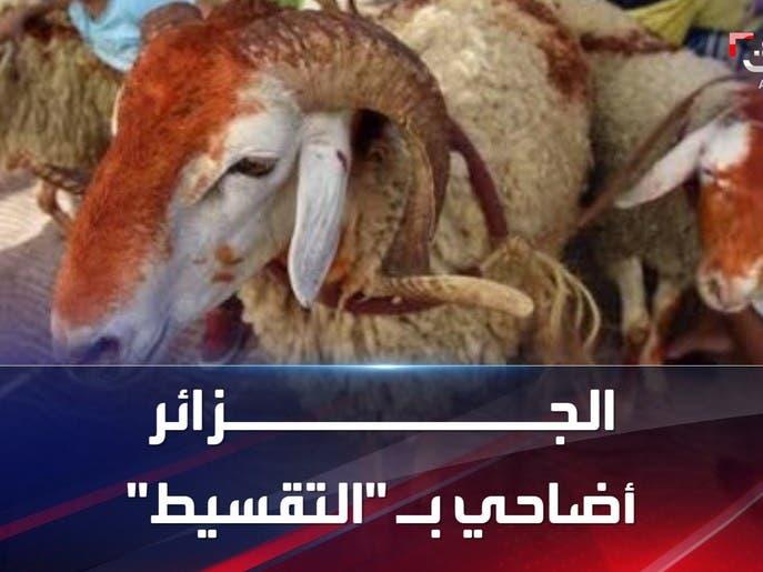 """الأضحية """"بالتقسيط"""" في الجزائر بسبب ارتفاع أسعارها"""