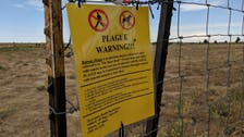 Ten-year-old boy dies in US from causes linked to bubonic plague: Official
